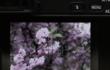 索尼A6300静物拍摄对焦展示