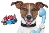 科技OMG:美国研发狗叫声翻译器,和宠物对话不是梦!