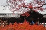 2017日本秋季直播第四天