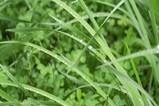 松下摄像机样片绿色植物