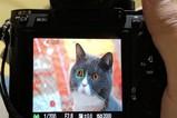 索尼A7RM3 Ver.3.01  动物眼控实时对焦