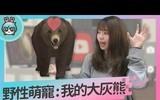 养隻大熊好吗?萌熊陪伴小游戏