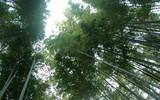 GoPro Hero6 样片展示竹林