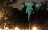 这视觉绝了,大象投影山中隐现