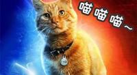 顽皮报:喵?惊奇队长与猫拯救世界