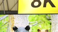 【AWE2019-在现场】 夏普80A9BW电视现场体验