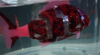 科技快讯:WRC塔米智能画像机器人&仿生鱼