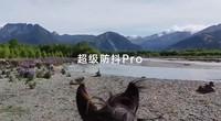 Reno3 Pro 12级防抖全运会—策马奔腾抖