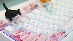 当我被一把键盘的手感折服时做视频是这样的.....#机械键盘