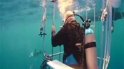 Galaxy S8海底开箱 迎来鲨鱼群围观
