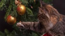 Hi,皂片儿:圣诞节特辑(第16期)