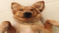 Hi,皂片儿:如何给狗狗拍摄照片(第32期)