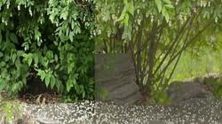 松下摄像机VLOG绿色植被