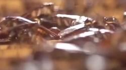 你知道世界上最大的蟑螂工厂在哪儿吗?每年可产60亿只,净利润达10亿元。有人跟我一起养蟑螂吗?